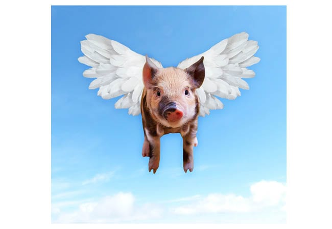 Part 2: Co-Parenting With My Narcissist? Yes … When Pigs Fly