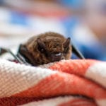 LOL, Parents!: Bat Attack and Feet That Smell Like Victory